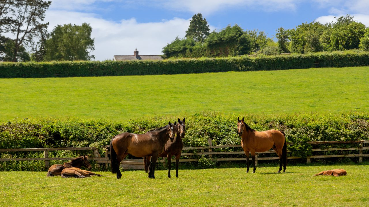 Video: 'Trophy property' on the market as well-known bloodstock breeder retires
