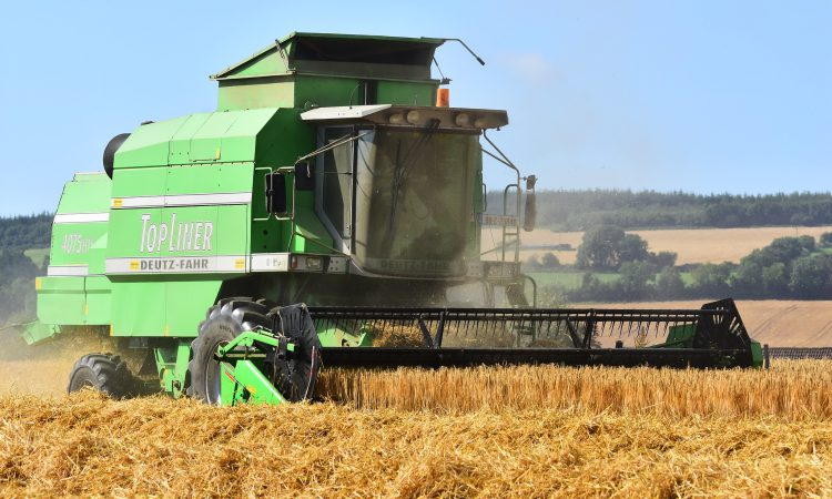 Barley accounts for 57% of all tillage crops planted in Ireland
