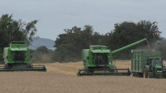Winter barley yields 'very poor' – Teagasc