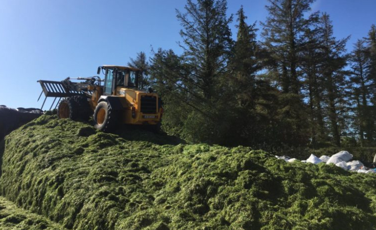 'Last year silage quality would have slipped and I paid the price in feeding meal'