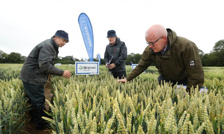 Seedtech launches new BYDV tolerant winter barley variety