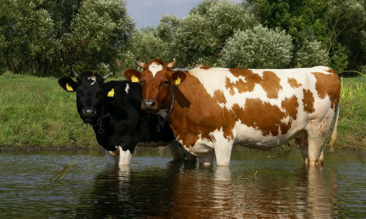 EPA: What impact do cattle access points to streams have on water quality?