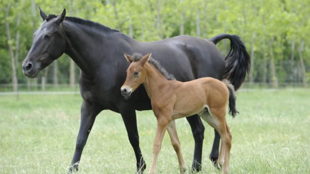 Letter to the editor: Issues with foal levy need to be addressed