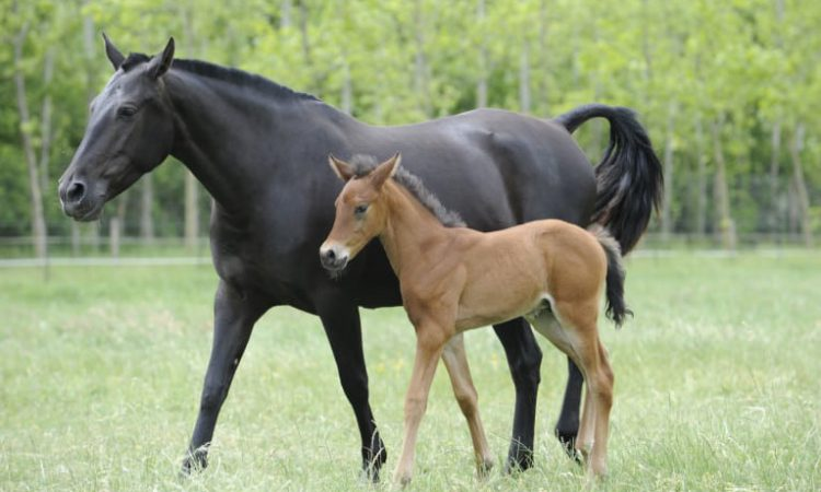 Letter to the editor: Why do so many people 'simply assume that the foal levy has to be paid?'