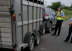 Driver towing livestock trailer arrested following Garda stop