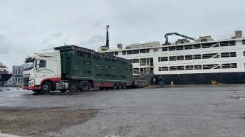 Pics: Loading 1,900 bulls bound for Libya in Co. Cork