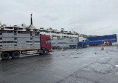 'No departure date agreed' for shipload of bulls bound for Libya