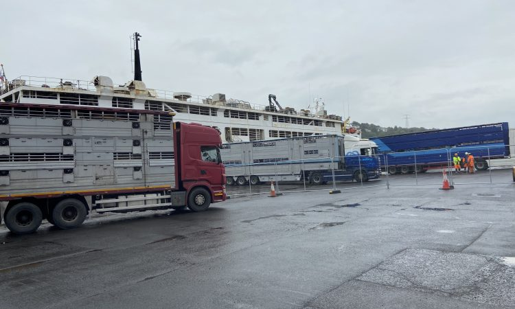 Waterford-based firm buying Friesian bulls for export
