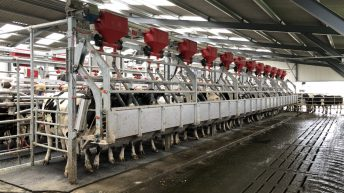 Buildings Focus: 24-unit rapid-exit parlour in action in Co. Wicklow