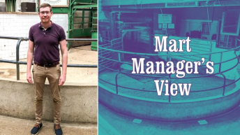 'Factory-finished lambs saw a big lift of €5/head on last week' – Kevin Murphy