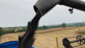 Price premium from new-to-the-market oilseed rape