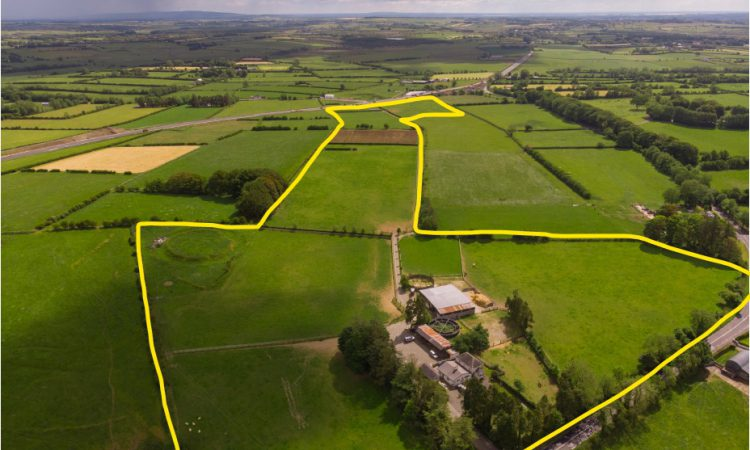 36ac stud farm with lands laid out in 11 well sheltered paddocks for sale