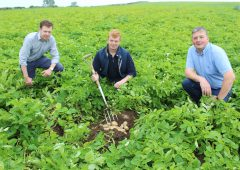 Lockdown leads to resurgence in potato consumption across NI
