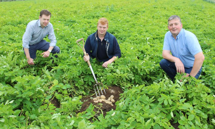 Lockdown leads to resurgence in potato consumption across NI