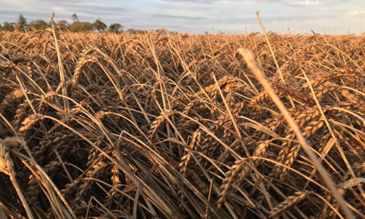 Assessment needed as harvest conditions deteriorate – IFA