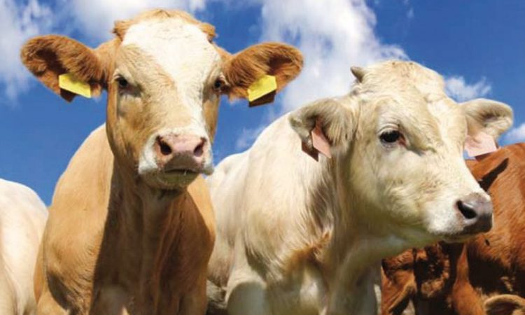 IFA urges beef farmers to 'continue to fight hard for price' while demand is good