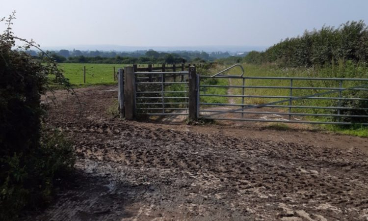 Escaped cow put down after walkers leave gate open