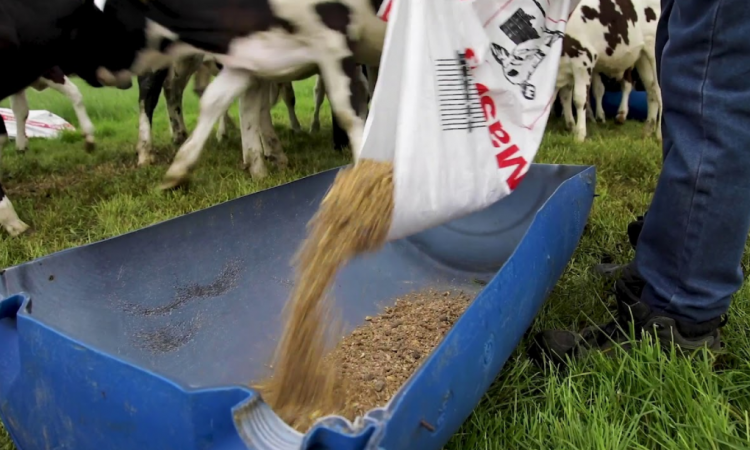 GrowthWatch: Meal feeding to be fast tracked to spring-born calves