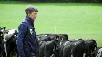 Virtual Farm Walk: Chasing heavier carcasses in Co. Roscommon