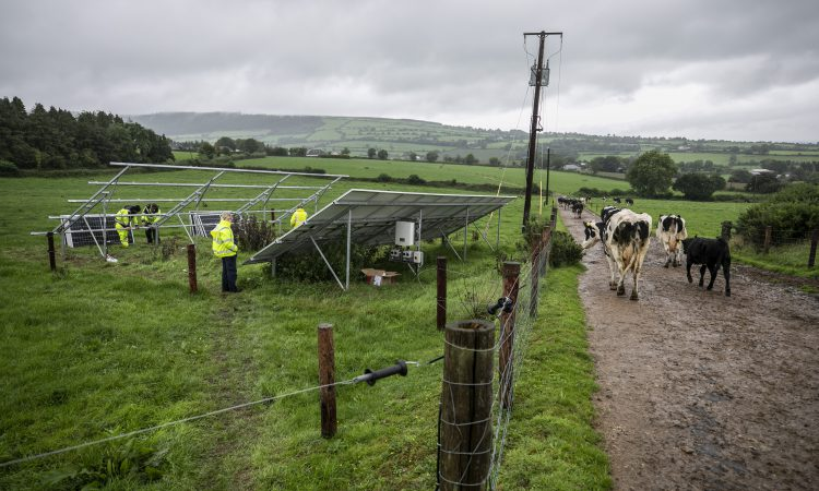 New double-sided solar panels installed on Kilkenny dairy farm