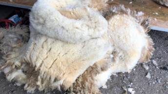 Farmers' views: 'If you had to travel to get rid of the wool you wouldn't get the price of the dieselback'