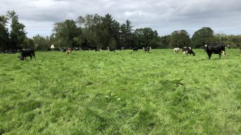 Grass advice: Options for reducing grass demand on farms