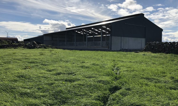 Buildings Focus: 6-bay slatted unit with a lieback area and crush in Co. Mayo