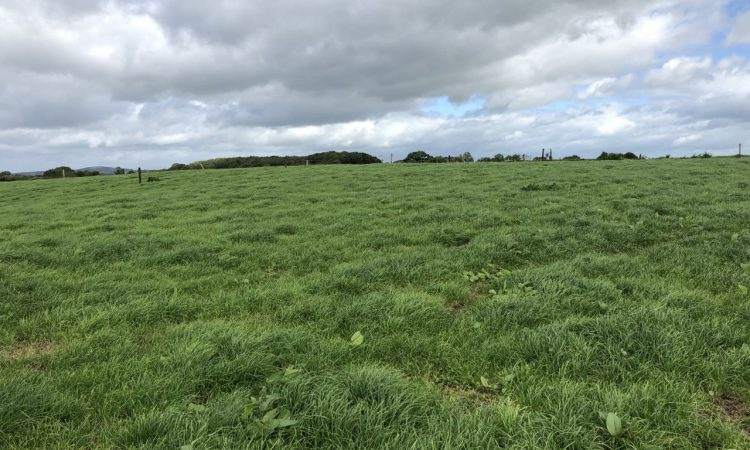 Grass growth: Time starting to run out to build grass as growth rates dip slightly