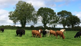 'Smashing farm': 80ac to suit dairy, equestrian or tillage in Co. Kildare