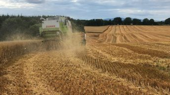 Chopping straw in difficult harvest conditions