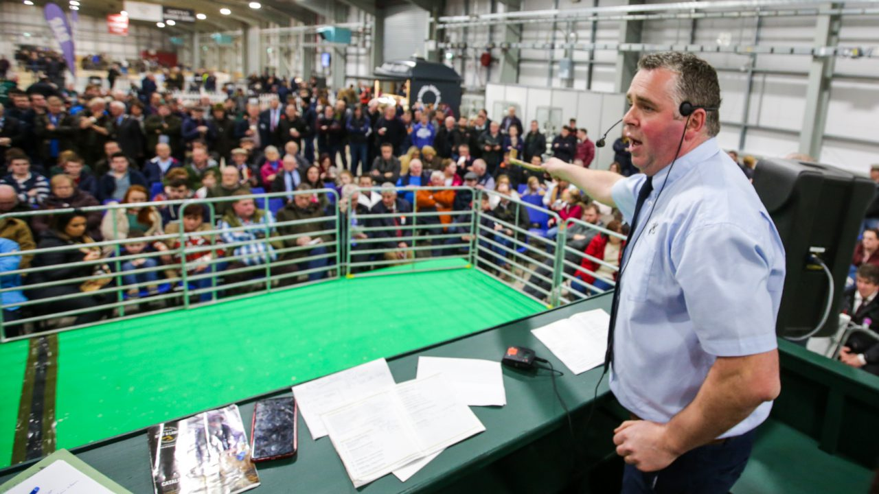Entries open for 2021 Premier Beef and Lamb Championships