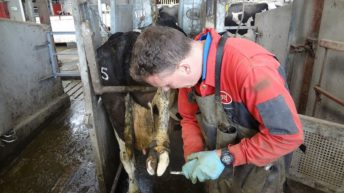 CAFRE's Technology Demonstration Farms get up and running again