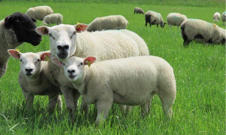 Maintaining high flock health