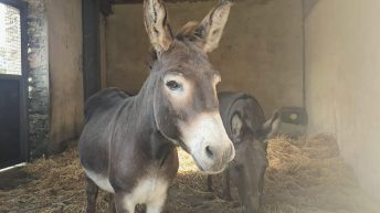 Abandoned donkeys seized by Gardaí following welfare check in Kilkenny