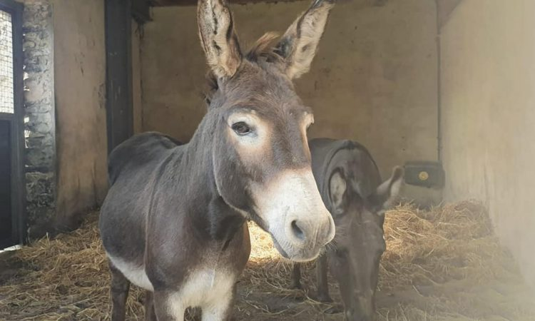Abandoned donkeys seized by Gardaí following welfare check in Kilkenny