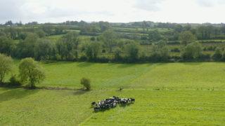 Virtual Farm Walk: Introduction to Martin Connolly's farm – Teagasc Green Acres Calf to Beef Programme Participant