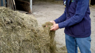 Virtual Farm Walk: Silage harvesting and quality- Calf to Beef Programme