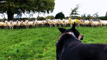 Video: Gerard Carey talks about the breeding season and this year's crop of lambs