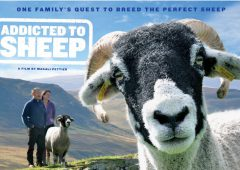 Project Baa Baa celebrates contribution of sheep to our lives