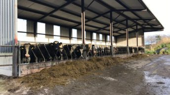 GrowthWatch: Grazing season draws to a close for heavier stock