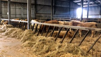 Video: Weaning calves, calving cows and finishing cattle in Gurteen