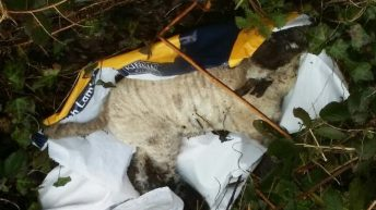 The 'depressing and exhausting' fight against illegal dumping in the countryside