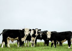 Quality Milk Awards 2020: Who was shortlisted in Ulster/Leinster?