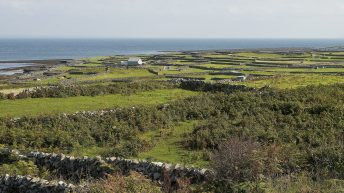 'We have an obligation to ensure their future': Protecting corncrake and Ireland's islands