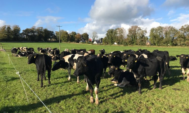 Teagasc Green Acres farmer outlines system in 'Beef Edge Masterclass' podcast
