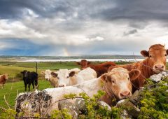 How to find the best insurance for your farm