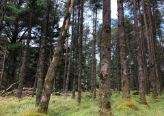 2-tier forest system 'disadvantages farm forestry'