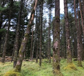 'Models incorporating forestry' discourage industrialisation being 'drumbeat of Irish agriculture'