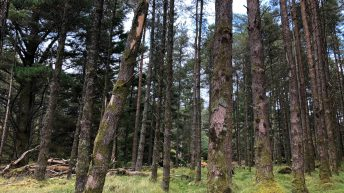 Agriculture minister urged to appoint chair to implement forestry report