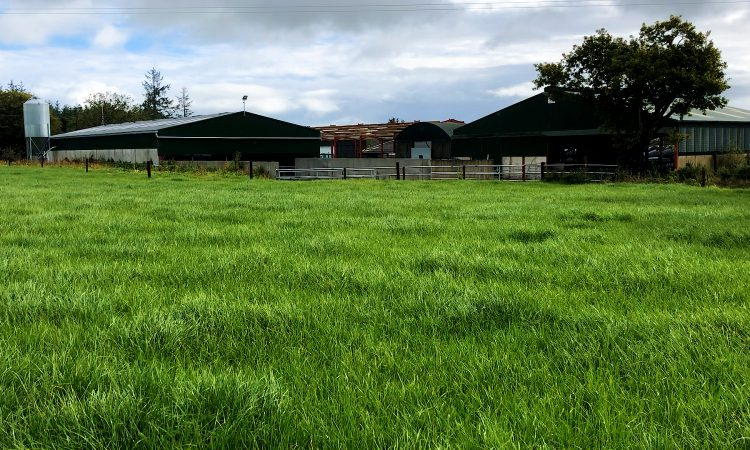 Dairy Focus: Applying the finishing touches to an expanding herd in Tipperary